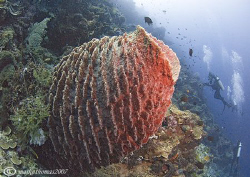 Sponge.
